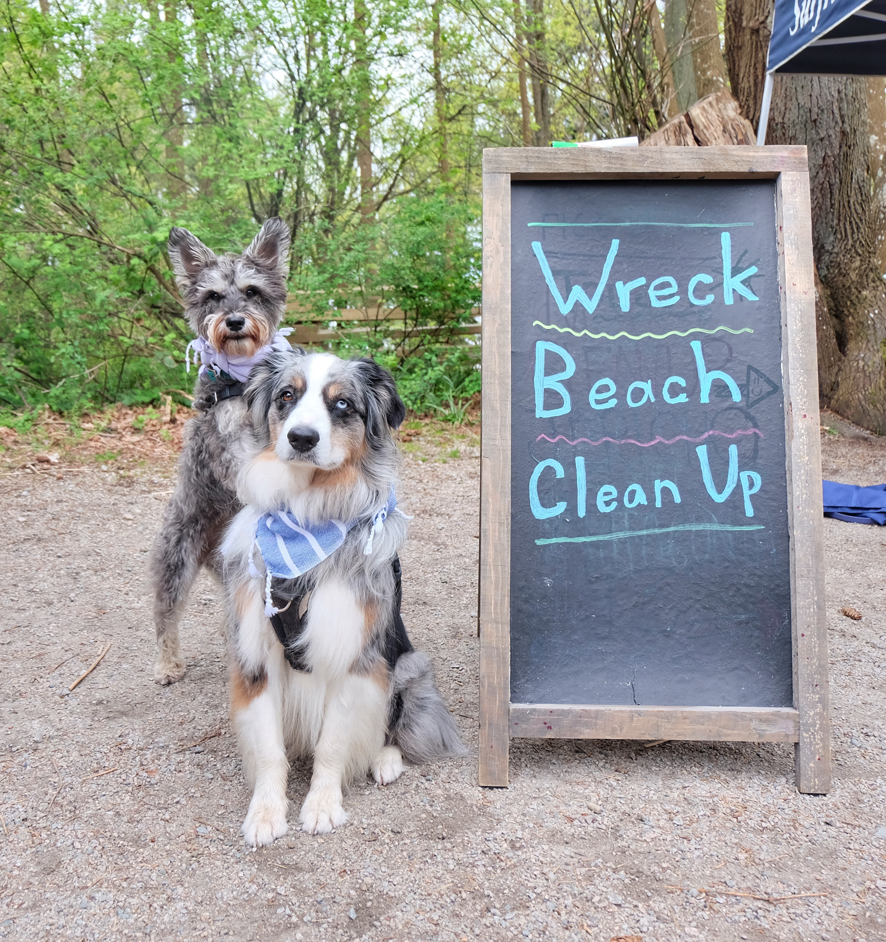 Beach Cleanup!
